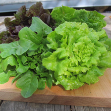 Load image into Gallery viewer, Little Gem Lettuce Mix Seeds