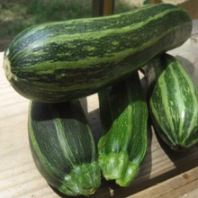 Load image into Gallery viewer, Cocozelle Zucchini Seeds