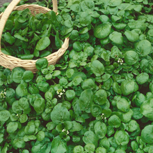 Load image into Gallery viewer, Watercress Seeds