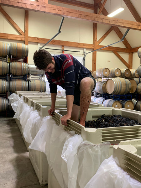 Ben Luker crushing grapes with his feet