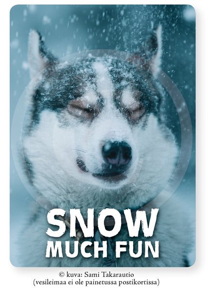 Lumihusky, SNOW MUCH FUN -postikortti A6, 5, 10 tai 20 kpl