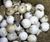 Costa Rican Biologists Are 3D Printing Fake Sea Turtle Eggs To Catch Poachers