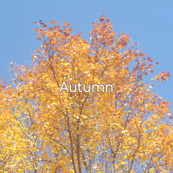 The Seasons Autum Collection image.