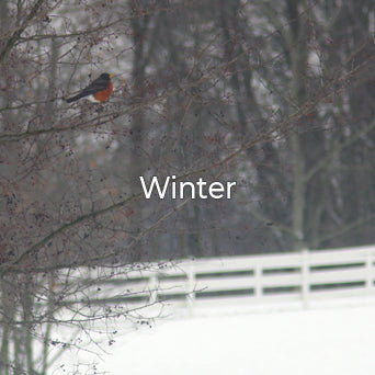 The Seasons Winter Collection image.