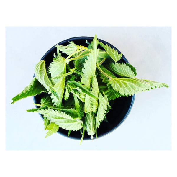 Study of the biochemical composition and the active substances of nettle  as a functional food