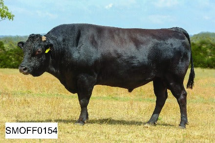 Wagyu Embryos For Sale Online Texas