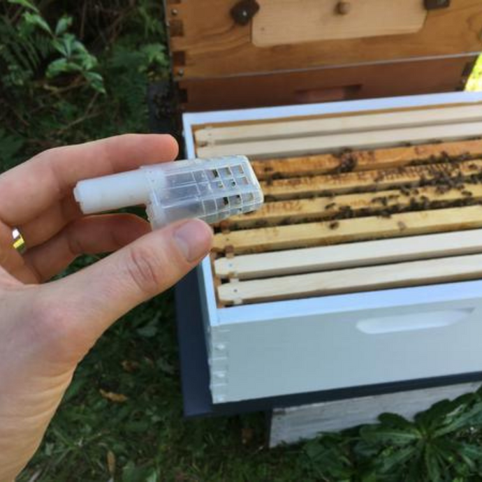 Installing a queen into a hive split