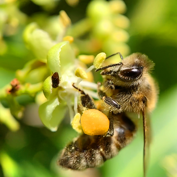 Get a BUZZ from a Bee-friendly garden