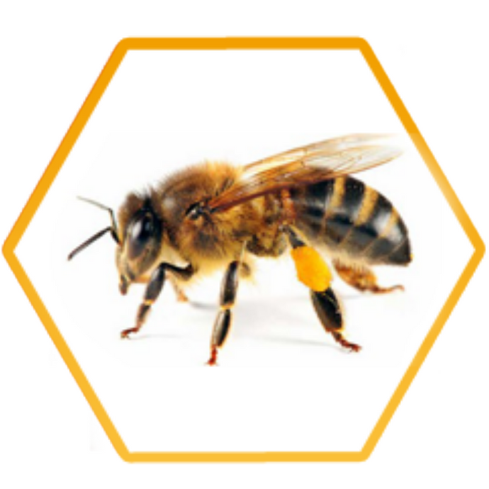 What is Cape Honey Bee and how do I treat it?