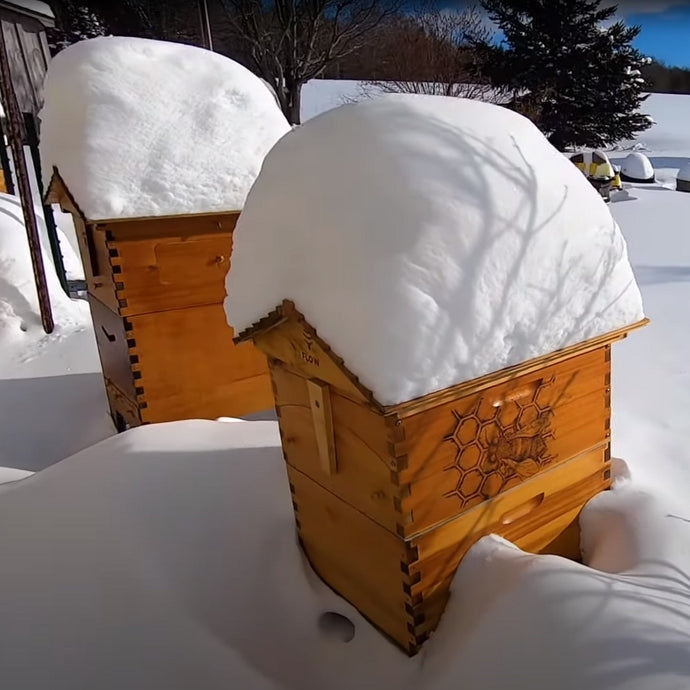 How to overwinter your beehive