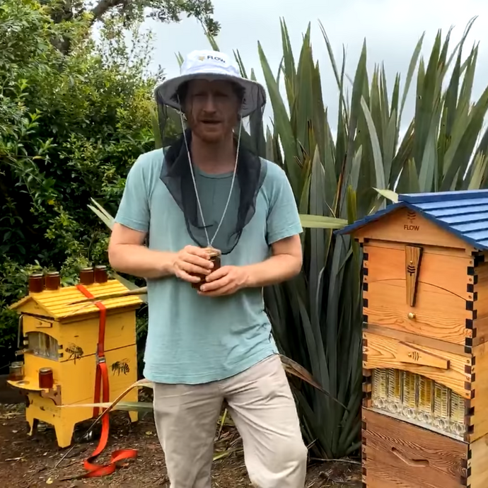 Beginner Beekeeping Q&A  - October