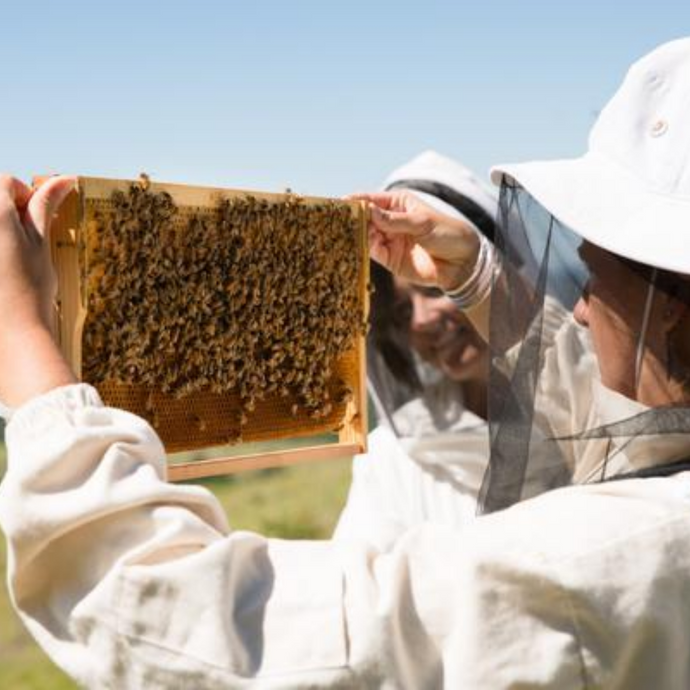 Colony management – frequently asked beekeeping question