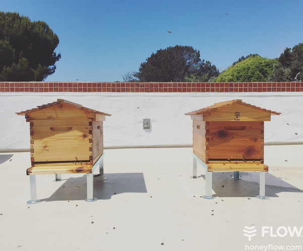 Newly established colonies must fill their brood box before adding a honey super.