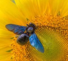 10 easy ways you can help the bees