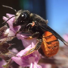 Load image into Gallery viewer, Flow Pollinator House