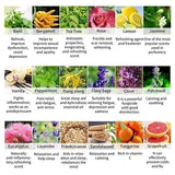 Sweetvally 10ml Pure Essential Oils 100% Pure Plant Essential Oil Aroma Plant Essential Oil Aromatherapy Therapeutic Grade 37 Scents for Choice