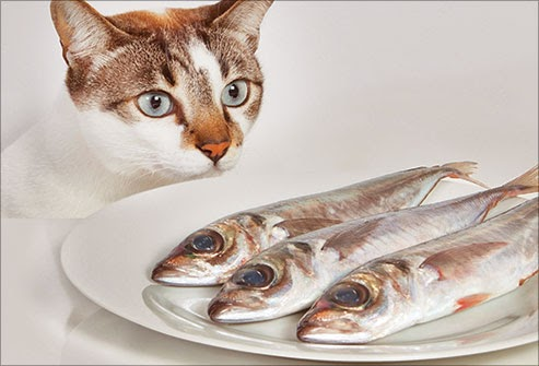 Health Benefits of Fish for Cats