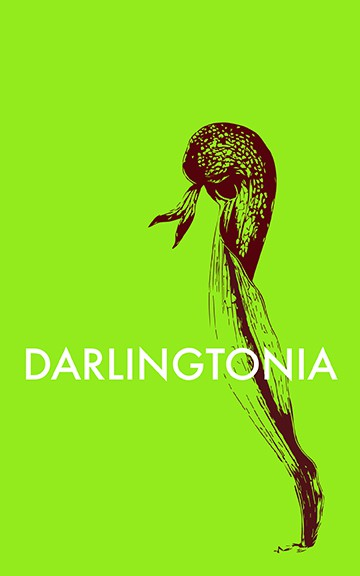 Darlingtonia | Alba Roja