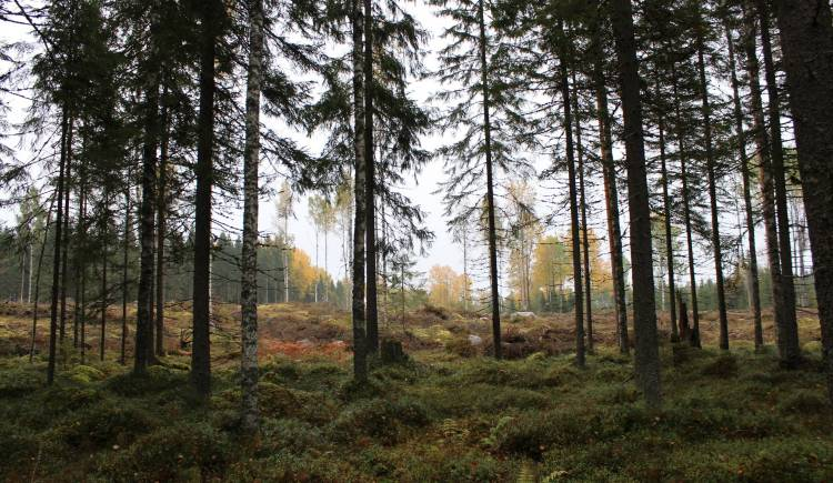 FSC forest, Finland