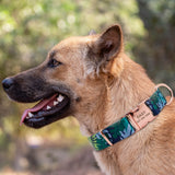 Personalized Printed Dog Collar