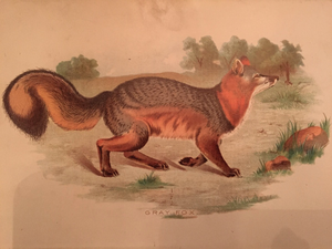Print Set - 3 Antique Fox scenes (quality reproductions from original book plates)