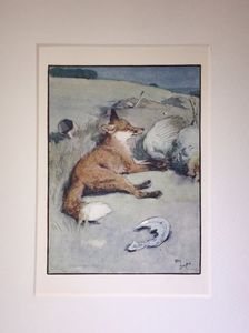 Print: Vintage Cecil Aldin Fox at rest