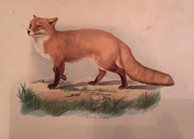 Load image into Gallery viewer, Print Set - 3 Antique Fox scenes (quality reproductions from original book plates)
