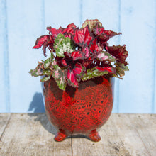 Load image into Gallery viewer, St Tropez Red Pot (3 sizes)
