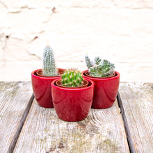 Load image into Gallery viewer, Mini Cactus Mix
