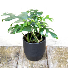 Load image into Gallery viewer, Pisa Plant Pot 13 x 13cm (5 colours)