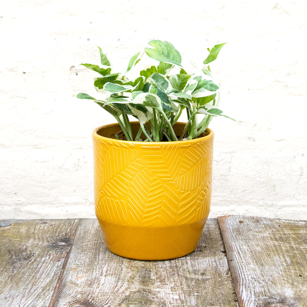 Pisa Plant Pot 13 x 13cm (5 colours)