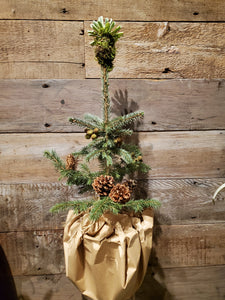 Sustainable Christmas Tree - Decorated Small Spruce