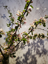 Load image into Gallery viewer, Spring Blossom Branches