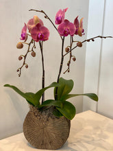 Load image into Gallery viewer, Orchid Planter