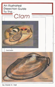 Dissection Guide to the Clam