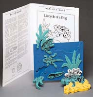 Book Plus Model - Lifecycle of a Frog