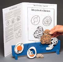 Book Plus Model - Lifecycle of a Chicken