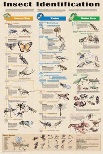 Insects Identification Poster