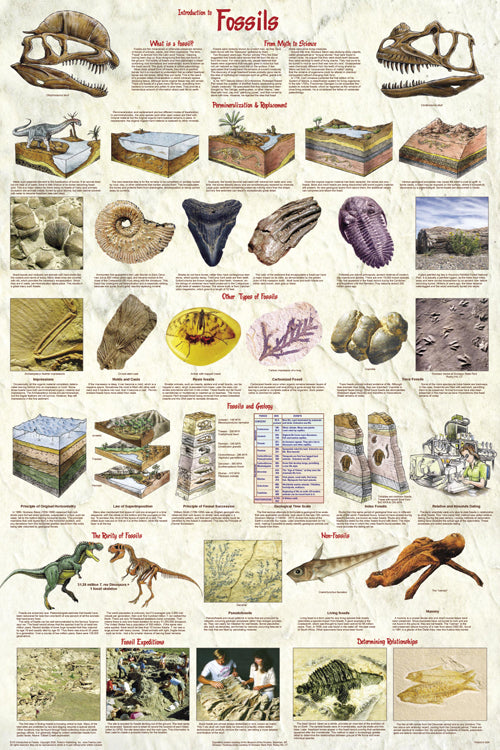 Intro to Fossils Poster