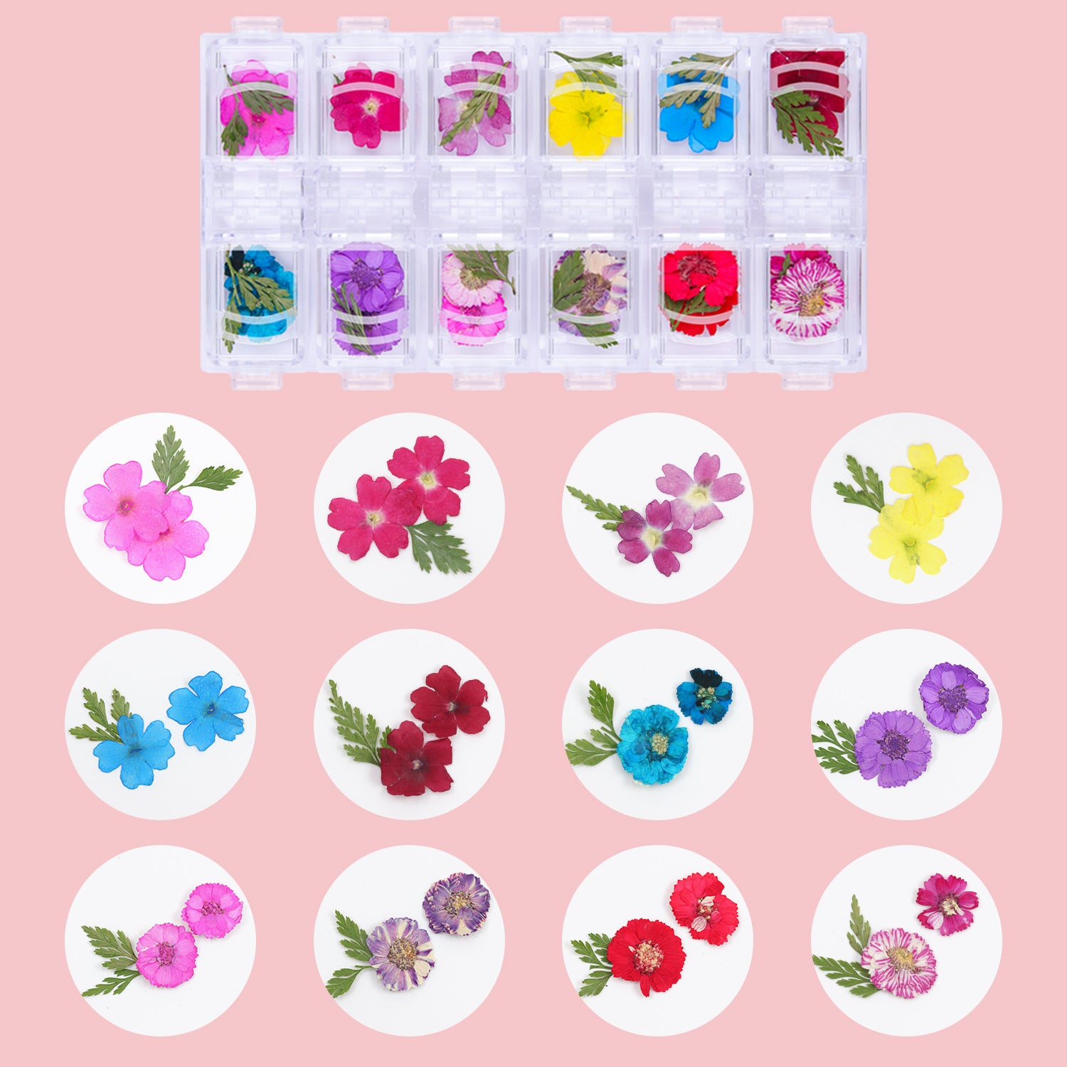 Boutique Florists Dried Flowers and Nail Extension Gel in Clear (50ml) Set