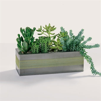 MYEASYFLOWERS-SUCCULENTA-GREEN-FATHERS DAY-