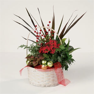 IVY-HEDERA-GLASS BALL-MYEASYFLOWERS-RIBBON-BASKET-DRACAENA-FITTONIA-Acanthaceae-CROTON-Codiaeum variegatuN-RED-XMAS