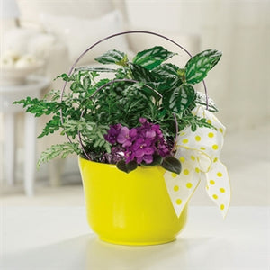 myeasyflowers--MARGARITA-DAISY_LAVANDER-YELLOW-RIBBON-FLOWER POT-GREEN LEAVES-DIEFFENBACHIA