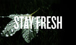 Stay Fresh: Freshness hacks to liven up your produce & ingredients