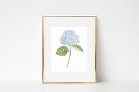 Hydrangea Watercolor Wall Art Print