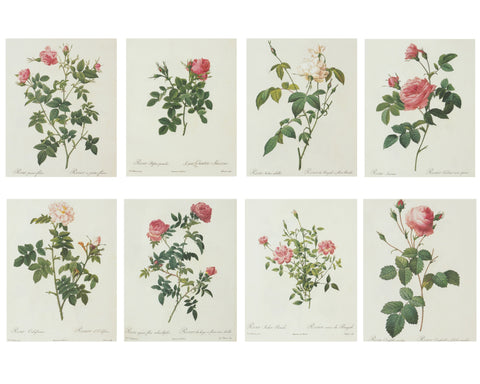 Redouté Pink & White Roses Wall Art Prints