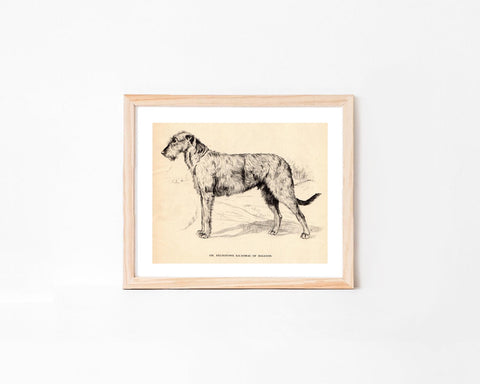 Vintage Irish Wolfhound Dog Art Print