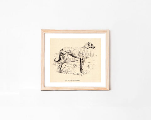 Vintage Scottish Deerhound Dog Art Print