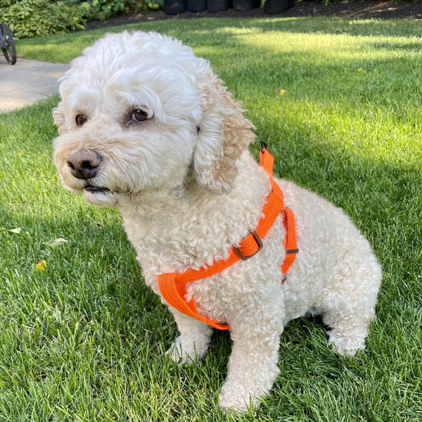 Stylish Harness and Leash Set