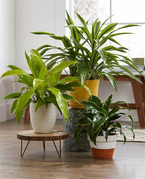 Houseplant Tips